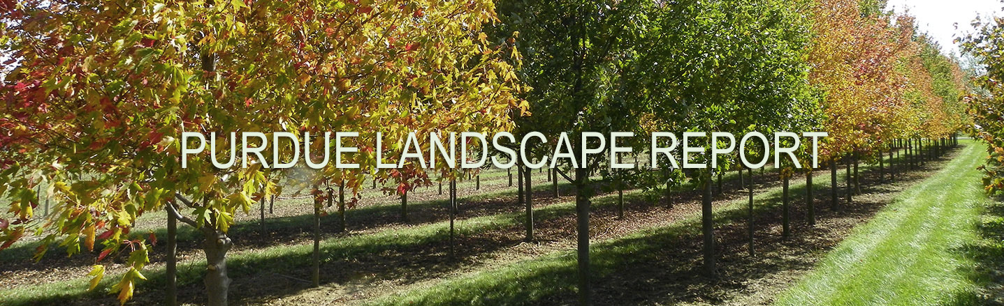 Landscape Report Identity