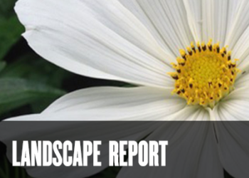 The Landscape Report