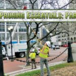 Tree-Pruning Essentials Part1